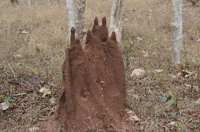termite control Owasso