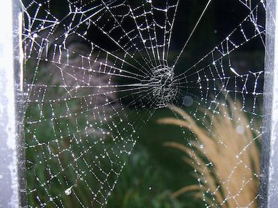 Spider Pest Control in Tulsa
