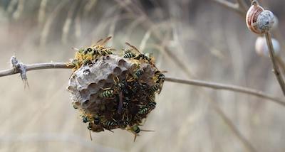 Wasp Control in Tulsa