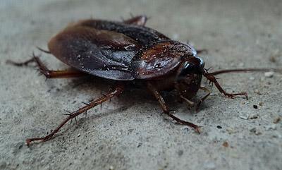 roach control Owasso